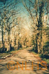 Hogspudding Lane - 1990